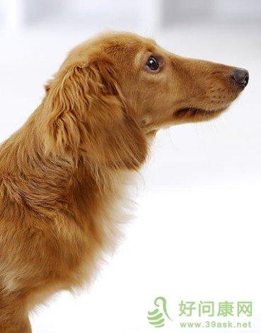 孕期饲养宠物的注意事项