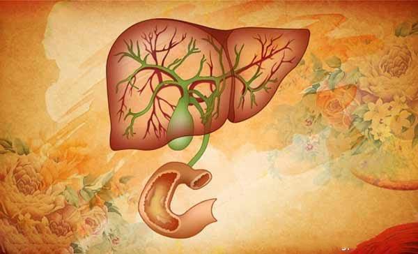 胆囊的位置