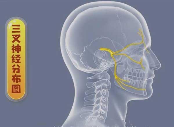 三叉神经的位置